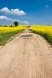 желтый цвет полей Стоковые Фото
