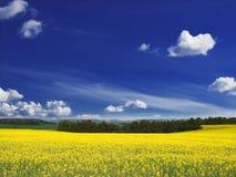 желтый цвет полей Стоковые Изображения