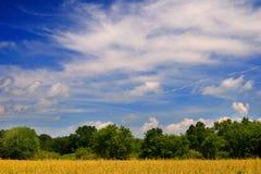 желтый цвет поля зеленый Стоковое Изображение