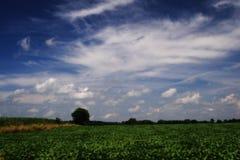 желтый цвет поля зеленый Стоковая Фотография RF