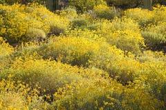 желтый цвет поля Стоковое Изображение RF