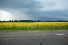 желтый цвет поля Стоковое Изображение