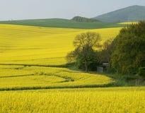 желтый цвет поля стоковая фотография