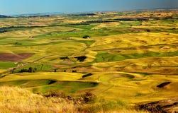 желтый цвет пшеницы вашингтона palouse полей ферм Стоковое Фото