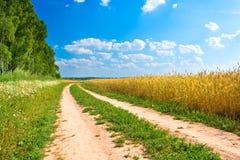 желтый цвет пшеницы дороги пущи поля Стоковое Фото
