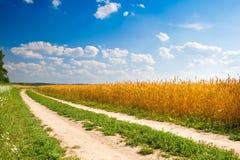 желтый цвет пшеницы дороги пущи поля Стоковая Фотография RF