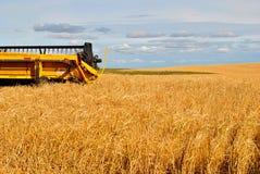 желтый цвет пшеницы поля зернокомбайна Стоковое Изображение