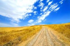 желтый цвет пшеницы поля Стоковые Изображения
