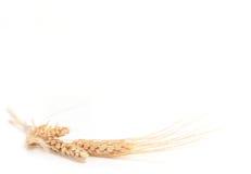 желтый цвет пшеницы съемки поля глубины весьма Стоковые Изображения