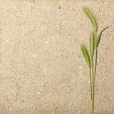 желтый цвет пшеницы текстуры влажного песка Стоковое Изображение RF