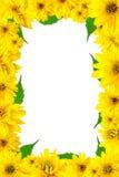 желтый цвет рамки цветков Стоковые Фотографии RF
