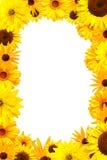 желтый цвет рамки цветков Стоковая Фотография RF