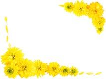 желтый цвет рамки цветков Стоковое Изображение RF