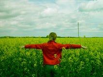 желтый цвет рапса поля Стоковая Фотография