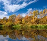 желтый цвет реки пущи свободного полета осени Стоковое Изображение