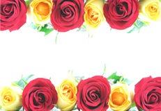 желтый цвет розы красного цвета граници Стоковое Фото