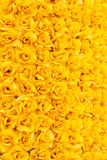 желтый цвет розы предпосылки Стоковые Фотографии RF