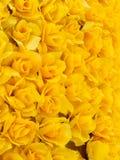 желтый цвет розы предпосылки Стоковое Фото