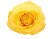 желтый цвет розы сердца крупного плана Стоковые Фото