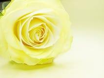 желтый цвет розы цветка крупного плана бутона Стоковые Фото