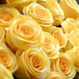 желтый цвет роз Стоковое Фото