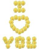 желтый цвет роз Стоковые Изображения RF