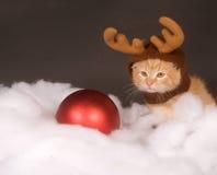 желтый цвет северного оленя котенка шлема стоковые фото