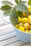 желтый цвет слив малый Стоковые Фото