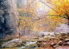 желтый цвет снежка листьев Стоковое Изображение RF