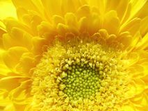 желтый цвет солнечности Стоковое Изображение
