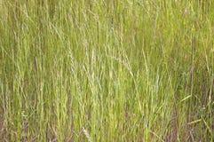 желтый цвет солнца травы Стоковые Изображения RF