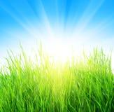желтый цвет солнца травы Стоковое фото RF