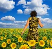 желтый цвет солнцецветов поля Стоковые Изображения