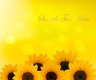 желтый цвет солнцецветов предпосылки Стоковые Изображения RF
