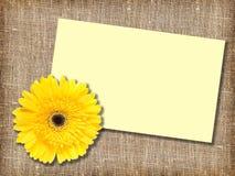 желтый цвет сообщения одного цветка карточки Стоковые Фото