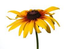 желтый цвет стоцвета Стоковые Фото
