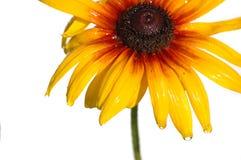 желтый цвет стоцвета Стоковые Изображения RF