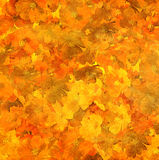 желтый цвет суматохи цветка ожога предпосылки Стоковое Изображение RF