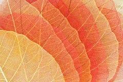 желтый цвет сухих листьев осени красный Стоковые Изображения RF