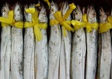 желтый цвет тесемки рыб Стоковое Изображение RF