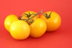 желтый цвет томата стоковая фотография rf
