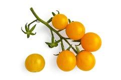 желтый цвет томатов вишни Стоковые Изображения