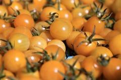 желтый цвет томатов вишни Стоковая Фотография