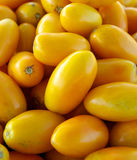 желтый цвет томатов сливы Стоковое Фото