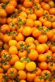 желтый цвет томатов Стоковые Изображения