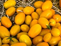 желтый цвет томатов Стоковая Фотография