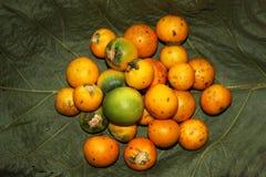 желтый цвет томатов Стоковые Изображения RF