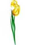 желтый цвет тюльпана дыма Стоковая Фотография