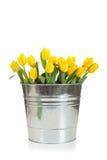 желтый цвет тюльпанов ведерка металла белый Стоковое Изображение