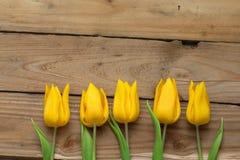 желтый цвет тюльпанов рядка Стоковые Изображения RF